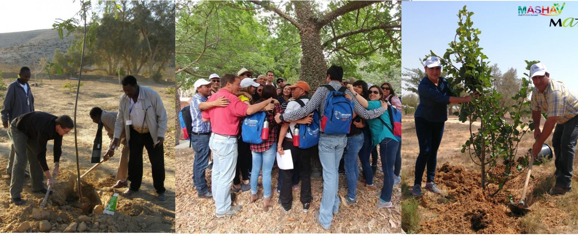 Participants in Tree Planting Activities
